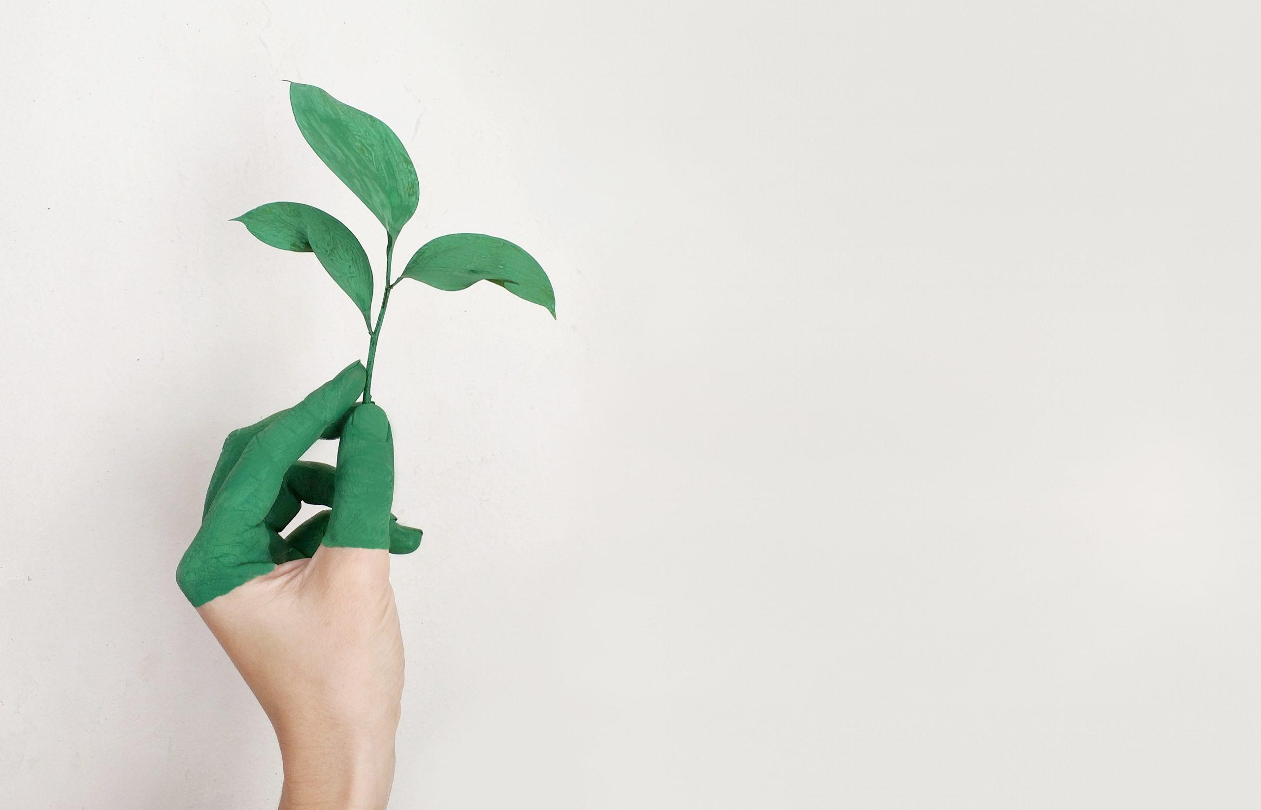 green startups in austin